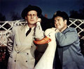 Abbott & Costello - abbott-and-costello photo