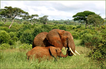 Africa Hintergrund with an african elefant and an elefant titled African Nature