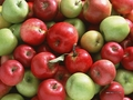Apples - fruit wallpaper