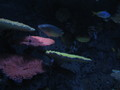 Aquarium in Tivoli, Denmark - fish photo