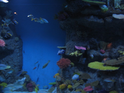 Aquarium in Tivoli, Denmark