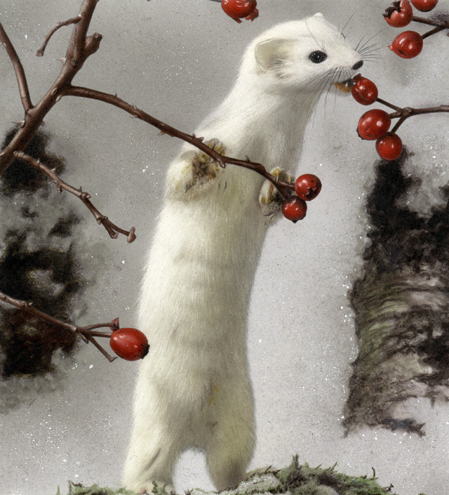 Hollistar, TearStar, FlameSword, WaterStar Awesome-White-Ferret-ferrets-1136757_640_705