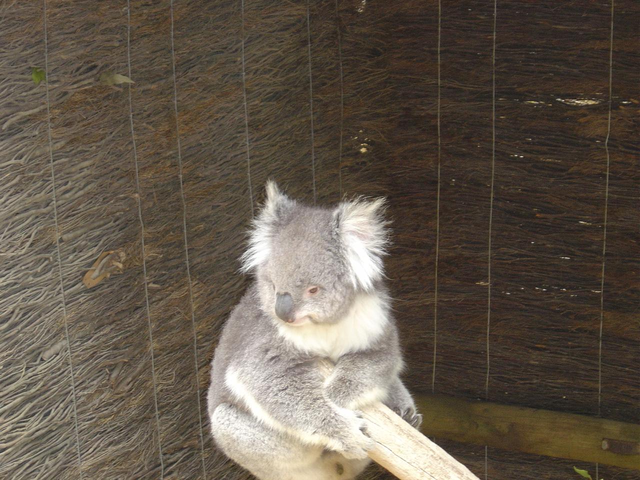 images ballarat wildlife - photo #5