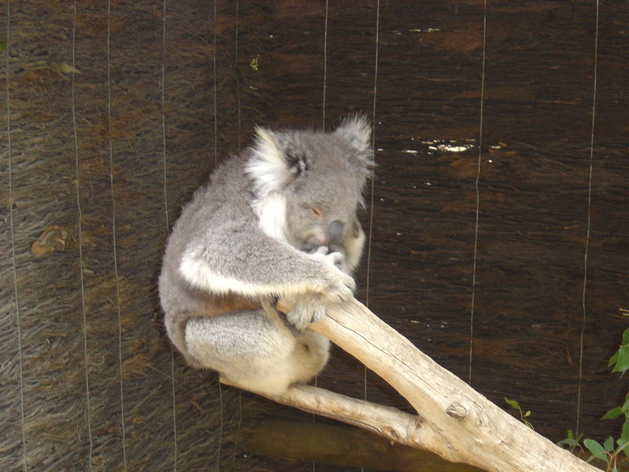 images ballarat wildlife - photo #2