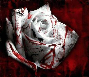 Beautiful Bloody mga rosas