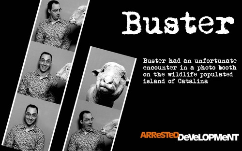Buster - Catalina Island - arrested-development Wallpaper