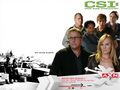 CSI - Sin Never Sleeps - catherine-willows wallpaper