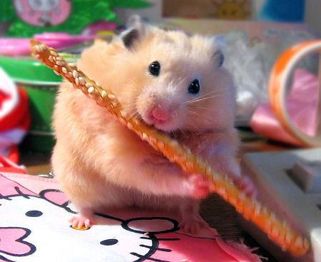 Hamsters wallpaper called CUTE