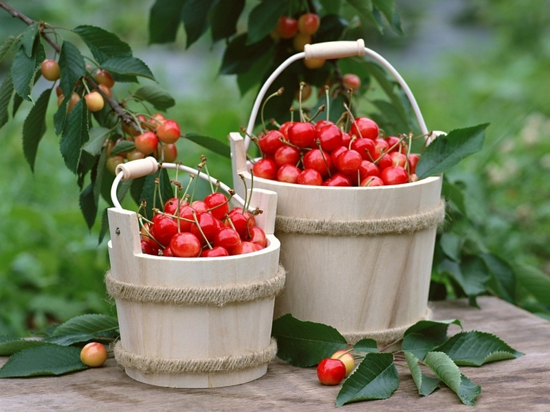 fruit wallpaper. Cherries - Fruit Wallpaper