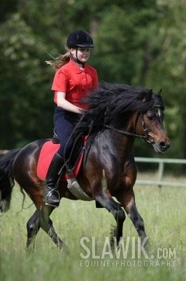 Dartmoor gppony, pony