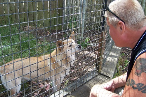 Delightful Dingos