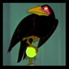 Diablo the corbeau, corneille