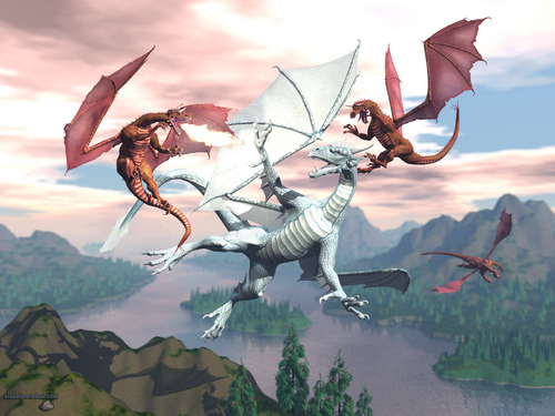 Dragons wallpaper called Dragon Fight