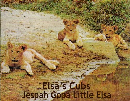 Elsa the leona mga litrato