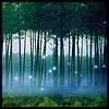 एनचांटेड Forest