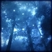 Enchanted Forest - fairy-tales-and-fables icon