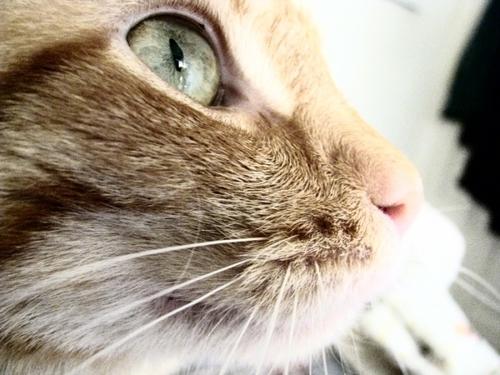 Eyes Like Marbles