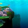 Finding Nemo Иконки