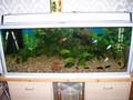 Freshwater Tank