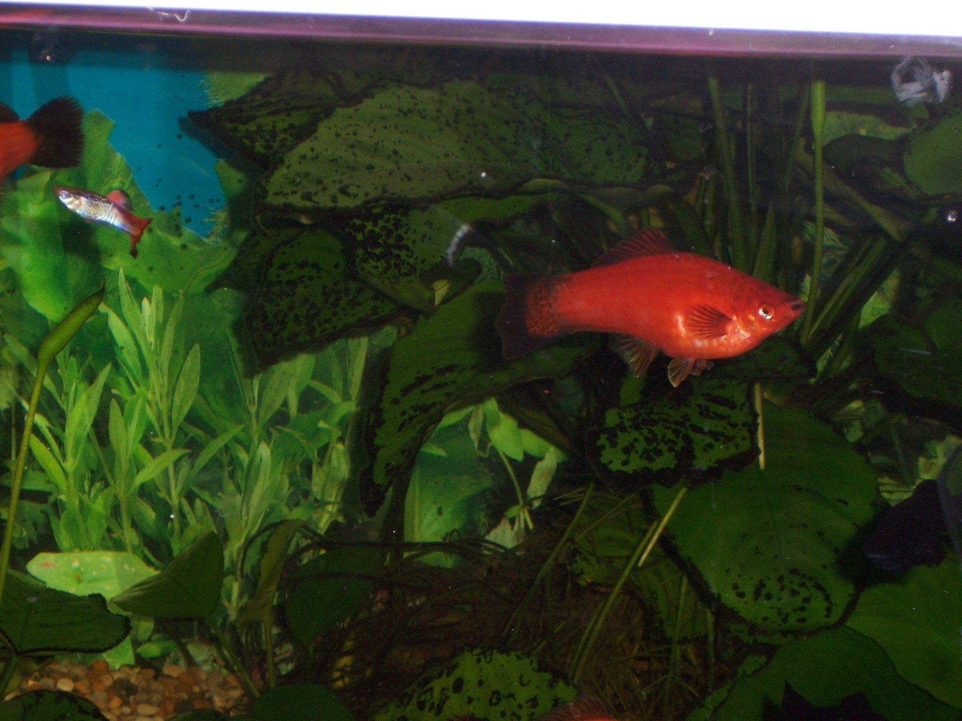 Freshwater Tank - Fish Photo (1145960) - Fanpop