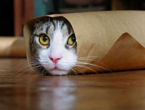 Animal Humor wallpaper entitled Funny Cat Pictures