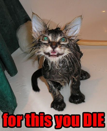 Funny Cat Pictures with Captions with Guns With Quotes ... Funny Pictures Of Cats
