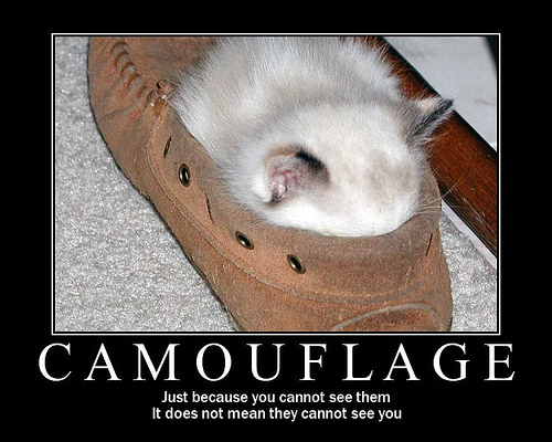 Funny Cat Pictures