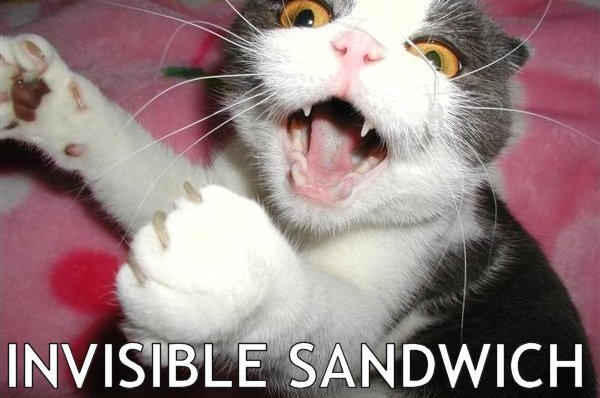 Funny Cat Pictures Words
