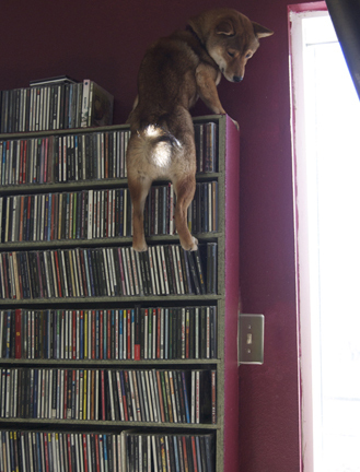Get down from there