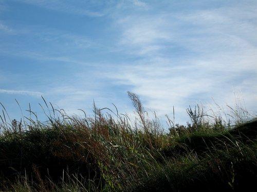 gras, grass