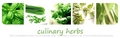 Green Culinary Herbs Banner