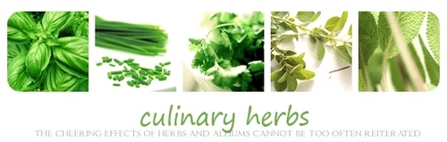 Green wallpaper titled Green Culinary Herbs Banner