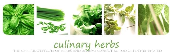Green Culinary Herbs Banner