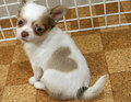 Heart-Kun, the कुत्ते का बच्चा, पिल्ला