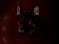 HellHound - urban-legends photo