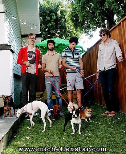 HelloGoodbye wallpaper probably with an italian greyhound entitled Hellogoodbye