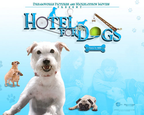 Hotel for Anjing