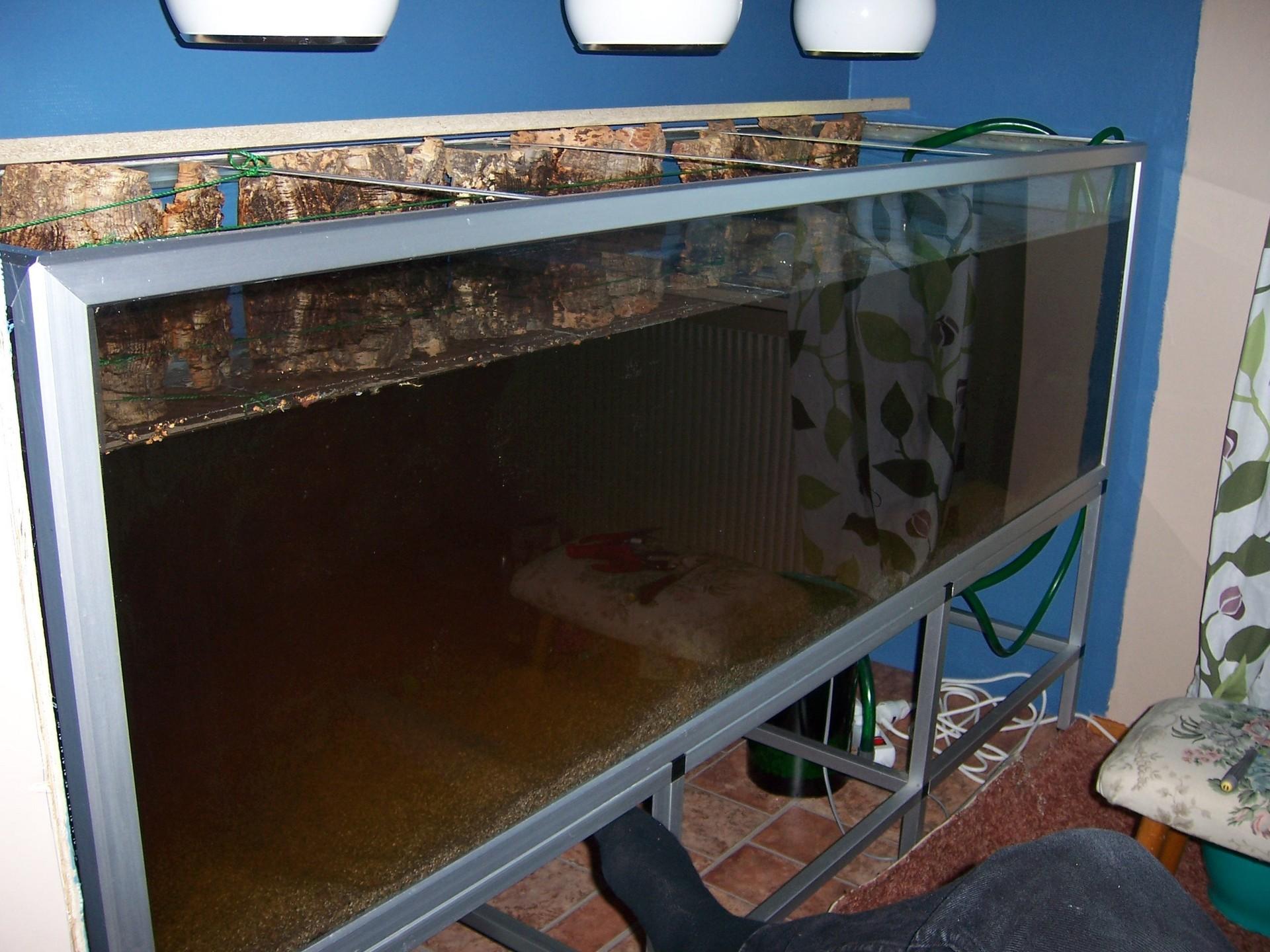 In Wall Aquarium Fish Wallpaper 1145743 Fanpop