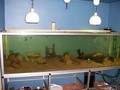 In-wall Aquarium - fish wallpaper
