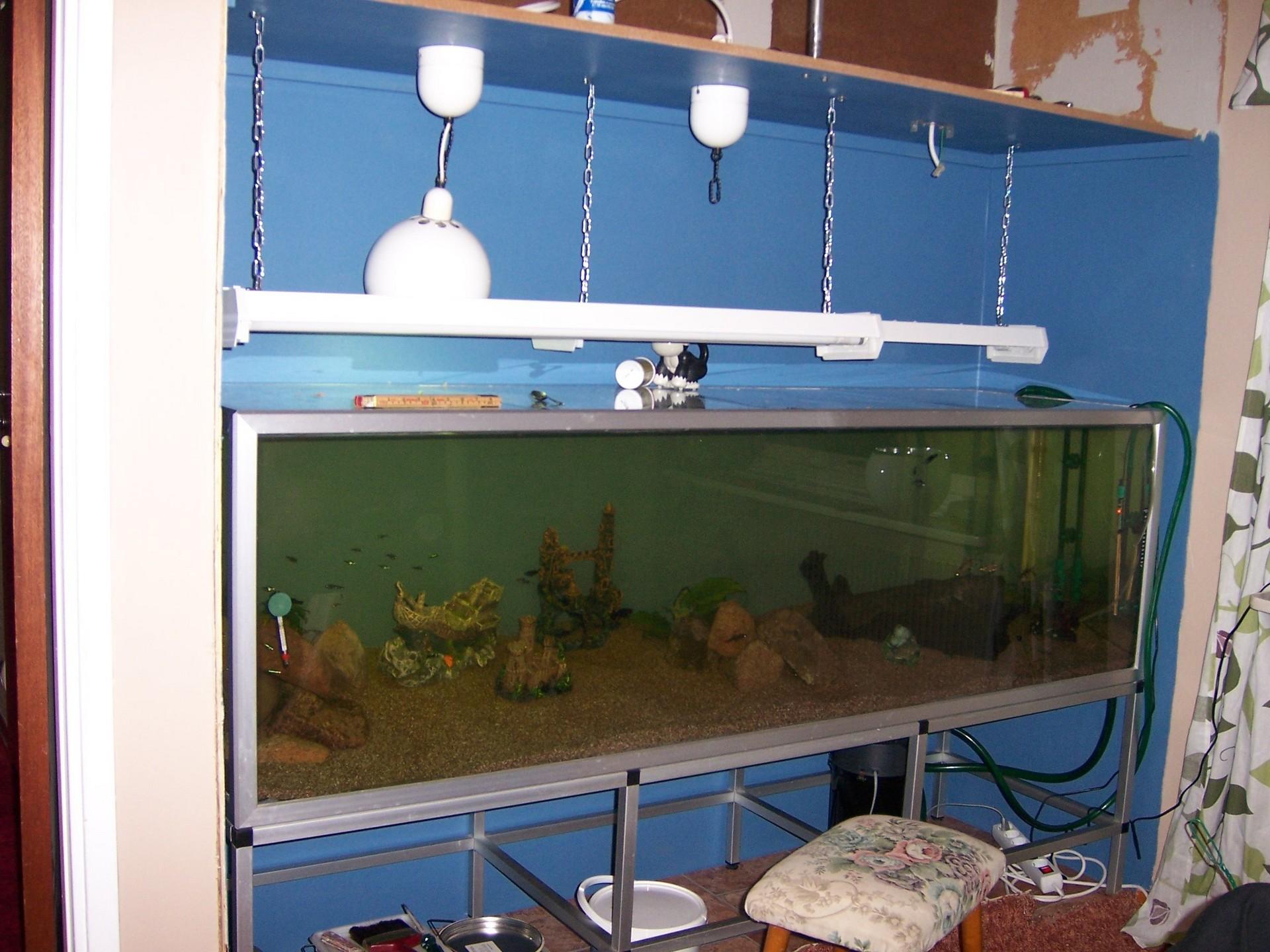 In Wall Aquarium Fish Wallpaper 1145770 Fanpop