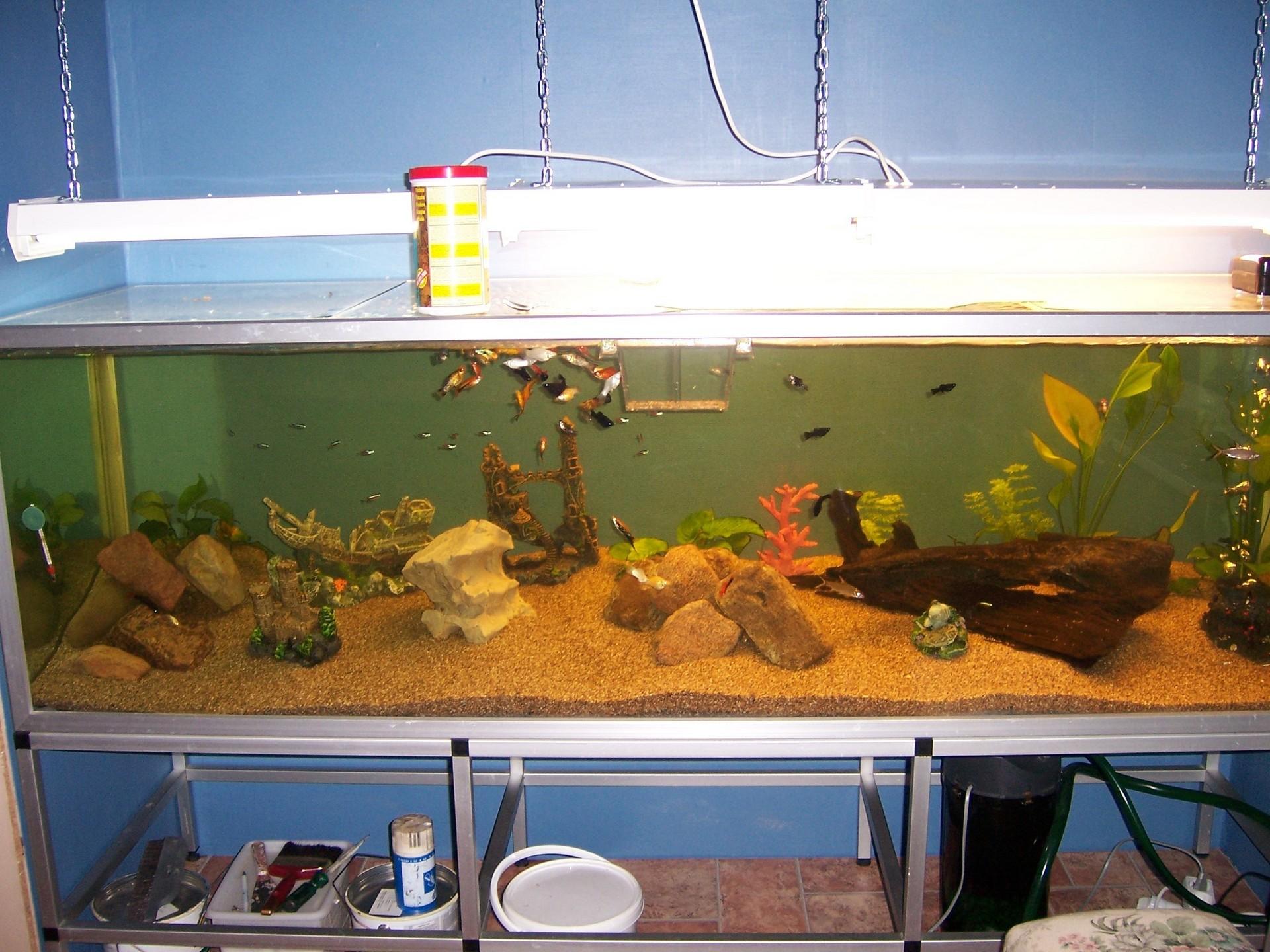 In Wall Aquarium Fish Wallpaper 1145831 Fanpop