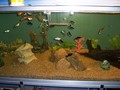 fish - In-wall Aquarium wallpaper