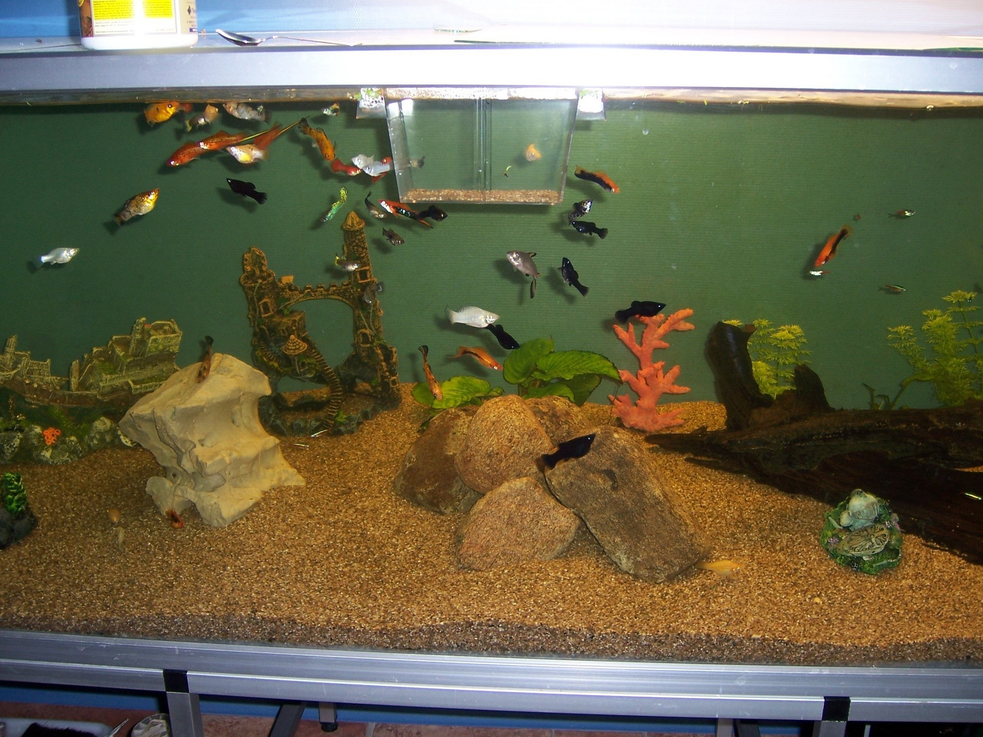 Fish Images In Wall Aquarium Hd Wallpaper And Background Photos