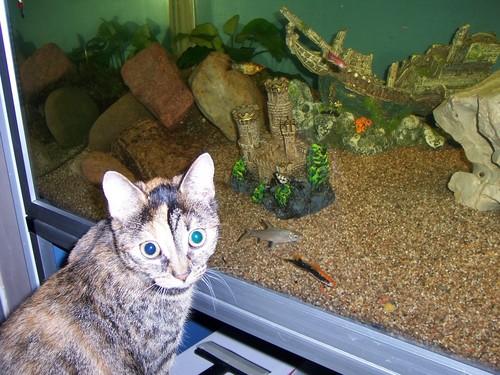 In-wall Aquarium