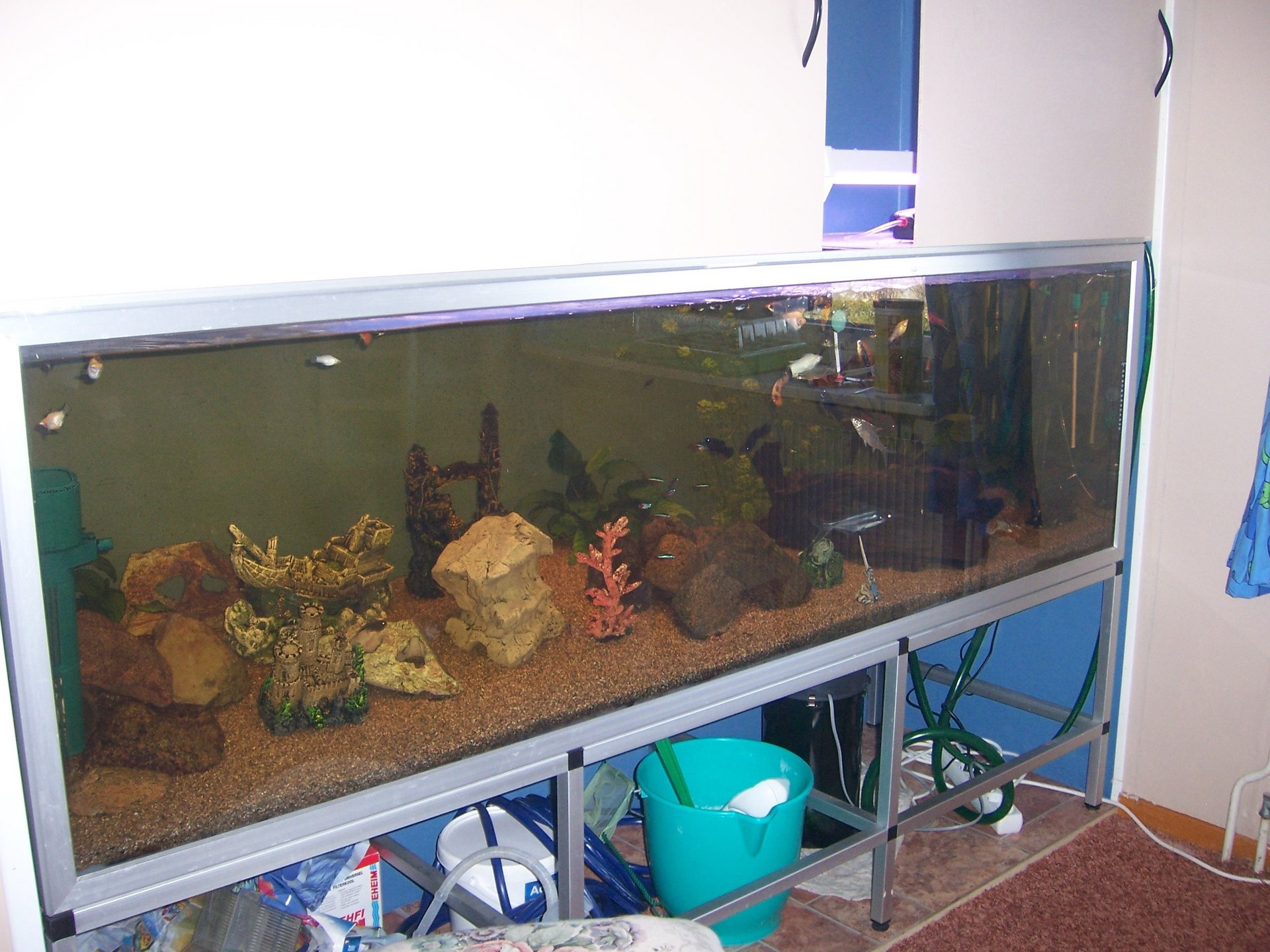 Fish images in wall aquarium hd wallpaper and background for Fish tank in wall