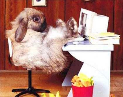Is bunny a fanpopper?