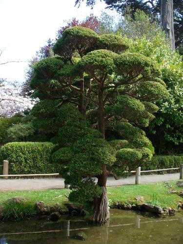 Japanese tee Garden