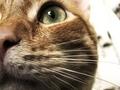 cats - Junior wallpaper