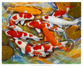 Koi painting - fish fan art