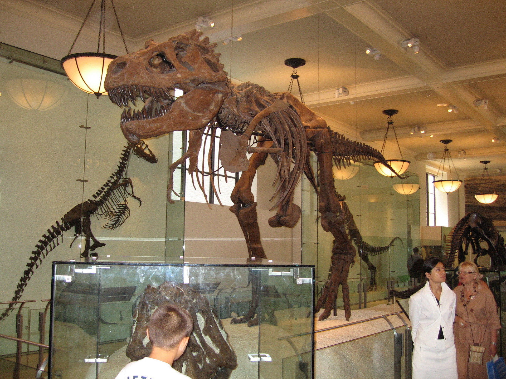 museum of natural history in new york: